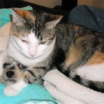 Fannie and Candy cropped.jpg